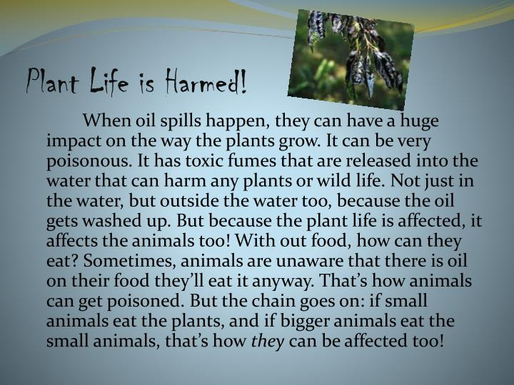 Plant life is harmed