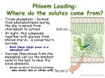 phloem loading where do the solutes come from