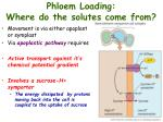 phloem loading where do the solutes come from2