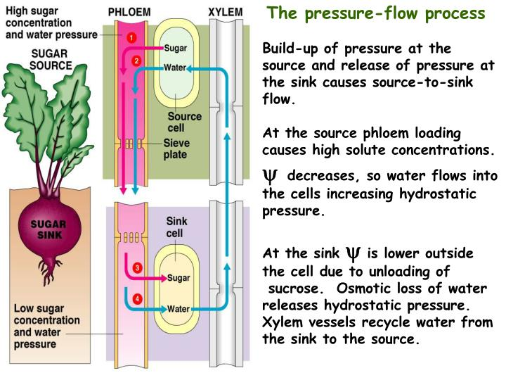 Pressure flow schematic