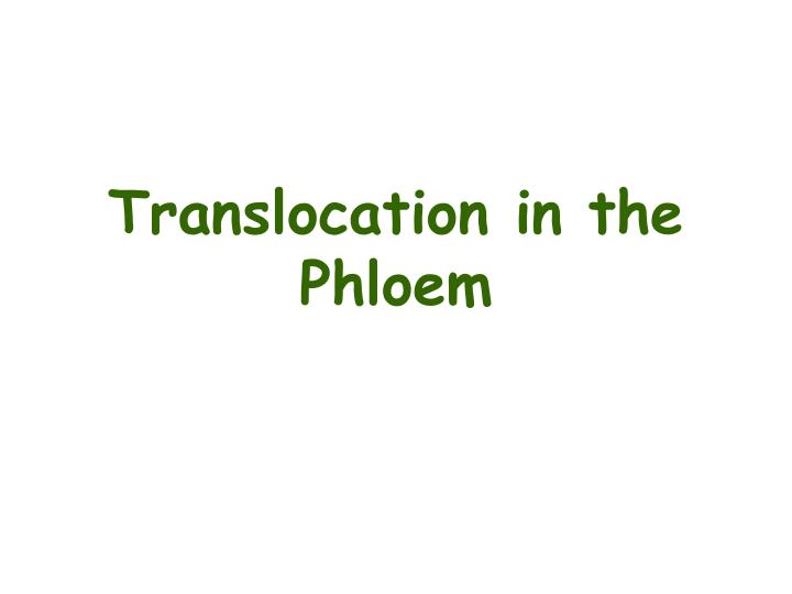 Translocation in the phloem