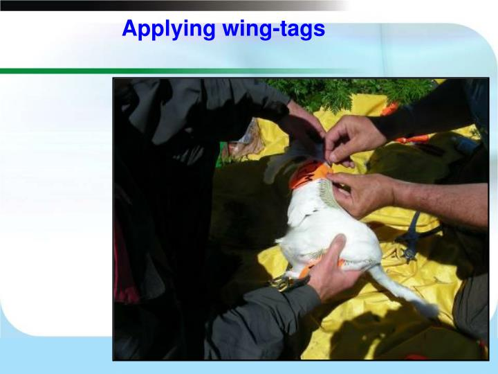 Applying wing-tags