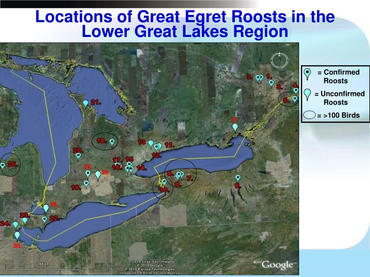 Locations of Great Egret Roosts in the