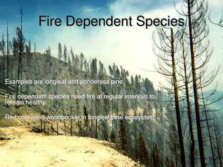 Fire Dependent Species