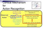 cortical mechanism for action recognition