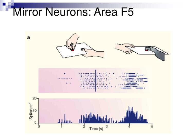 Mirror Neurons: Area F5