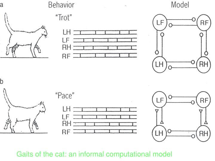 Gaits of the cat: an informal computational model