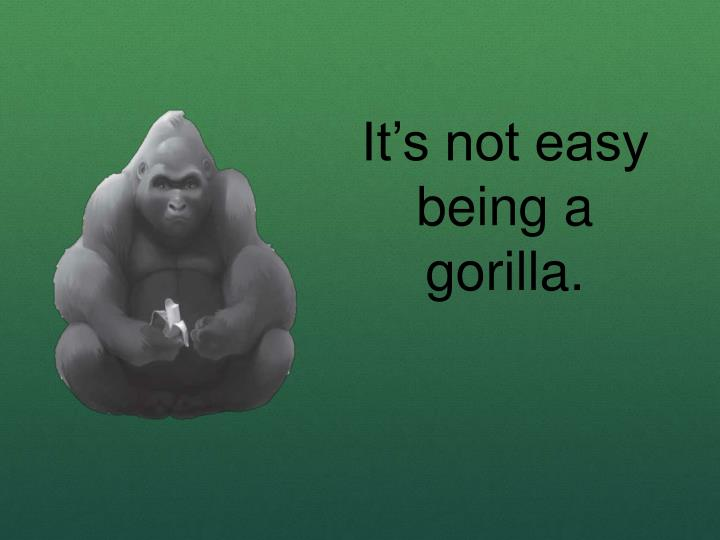 It's not easy being a gorilla.