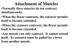 attachment of muscles1
