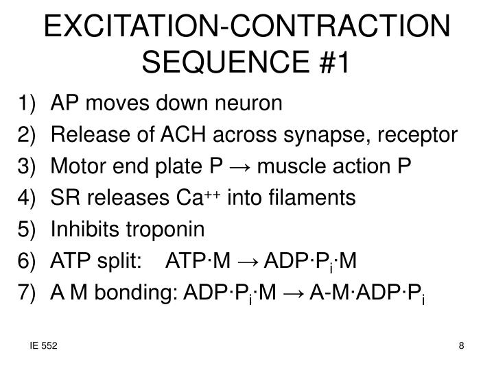 EXCITATION-CONTRACTION SEQUENCE #1
