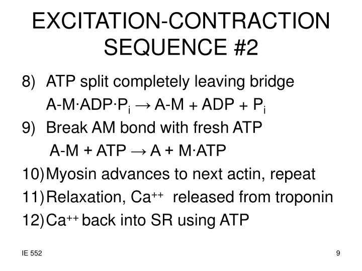 EXCITATION-CONTRACTION SEQUENCE #2