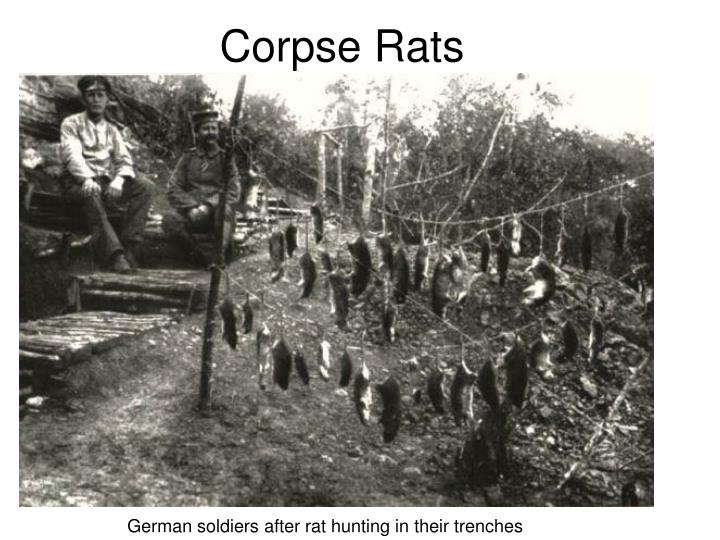 Corpse Rats