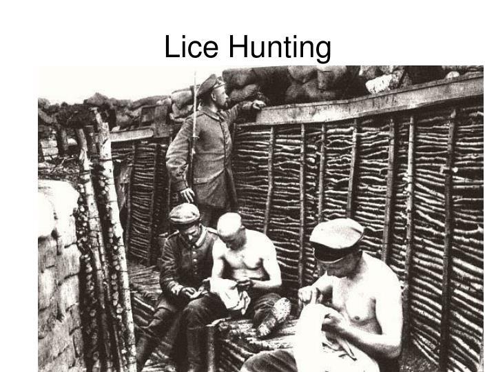 Lice Hunting