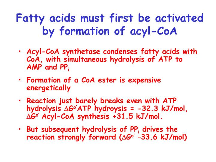 Fatty acids must first be activated by formation of acyl-CoA