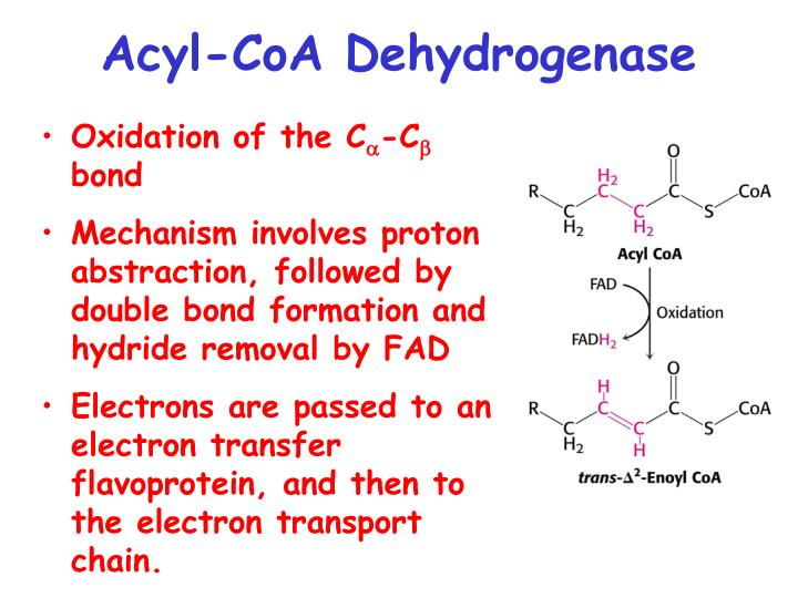 Acyl-CoA Dehydrogenase