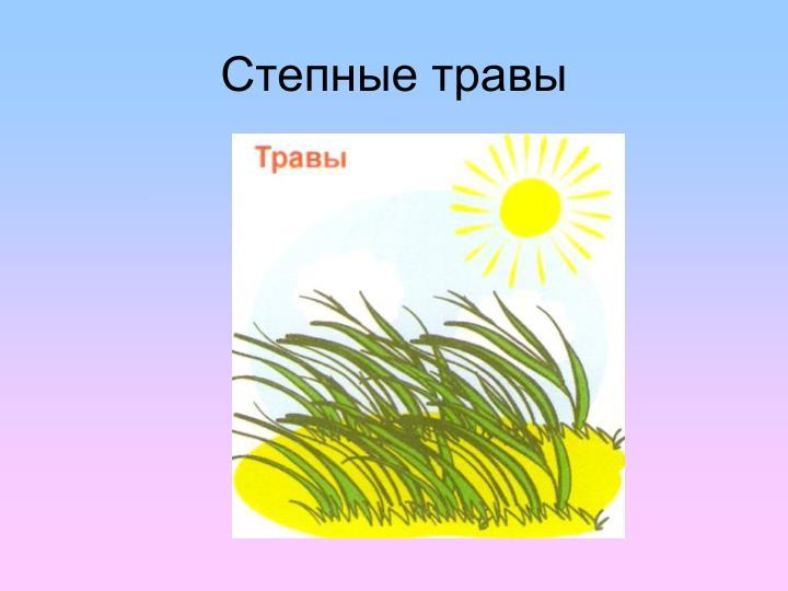 Степные травы