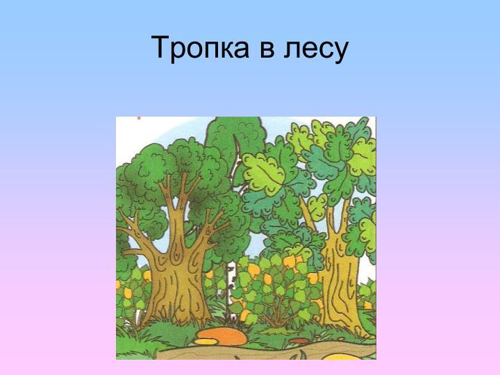 Тропка в лесу