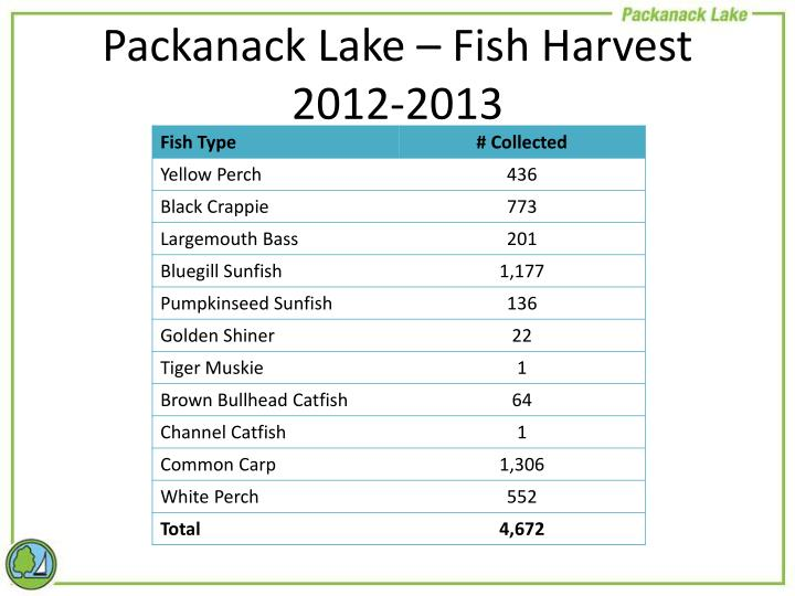 Packanack Lake – Fish Harvest 2012-2013