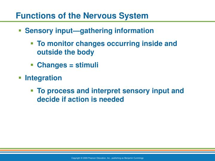 Functions of the Nervous System