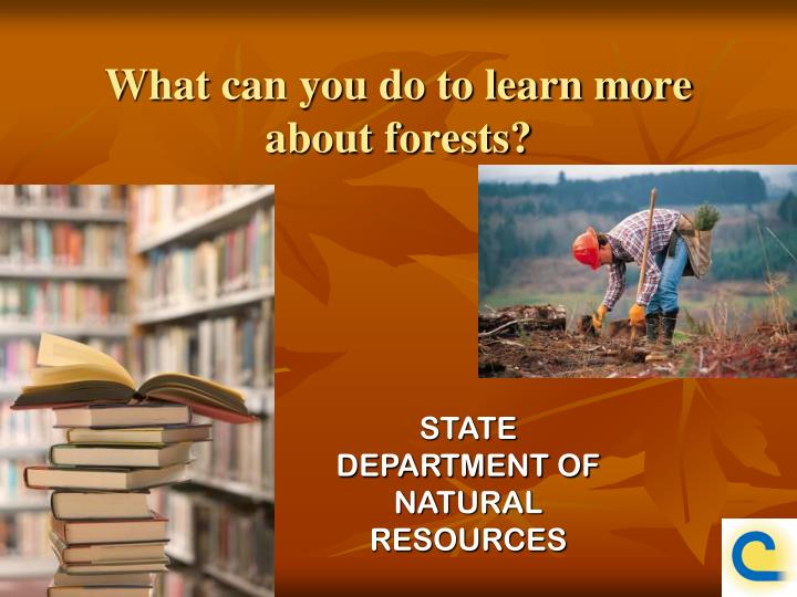 What can you do to learn more about forests?