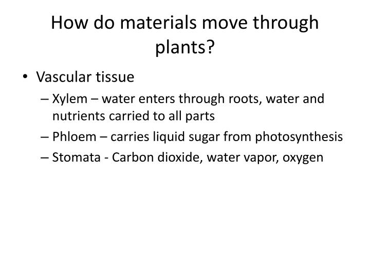 How do materials move through plants