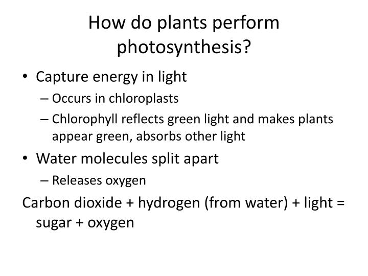 How do plants perform photosynthesis?