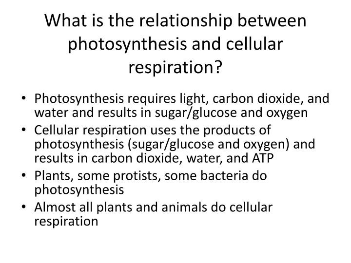 What is the relationship between photosynthesis and cellular respiration?