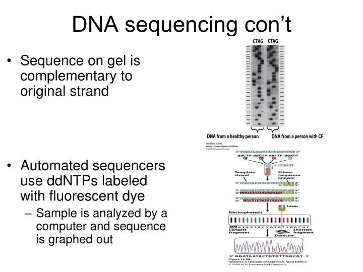 DNA sequencing con't