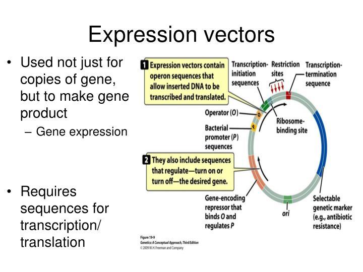 Expression vectors