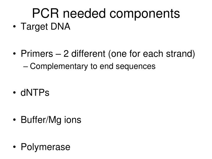 PCR needed components