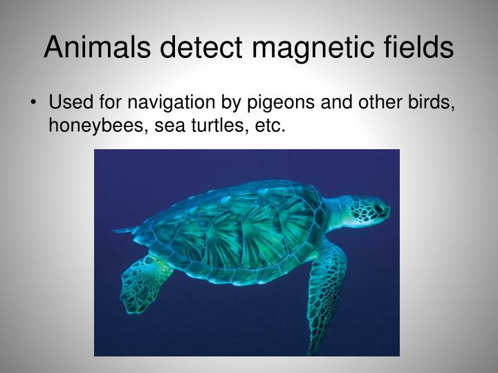 Animals detect magnetic fields