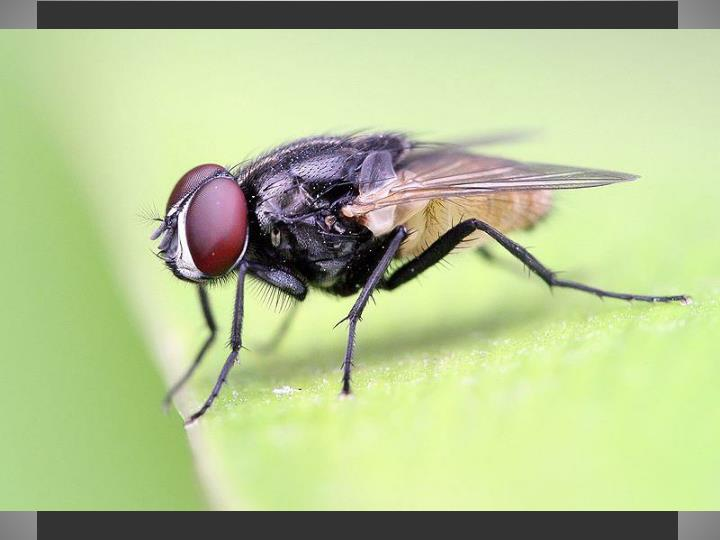 Insect – Chemical Receptors