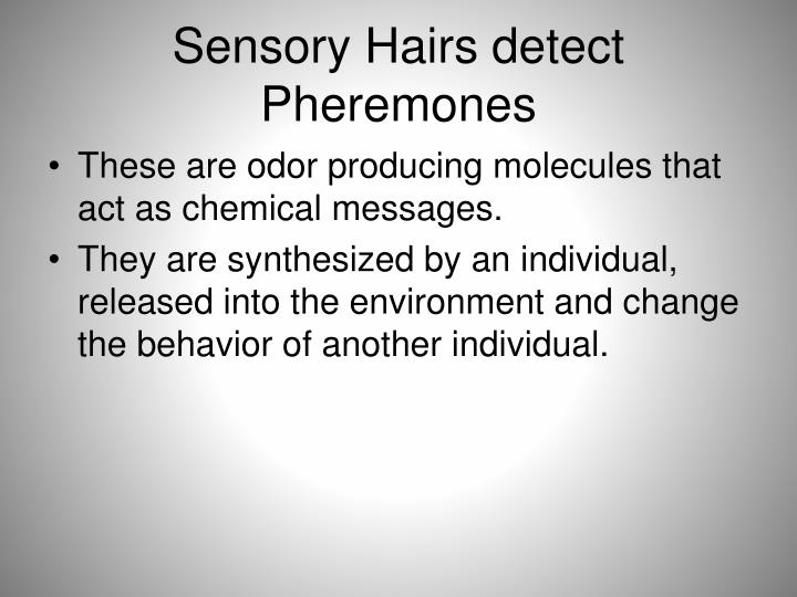 Sensory Hairs detect Pheremones