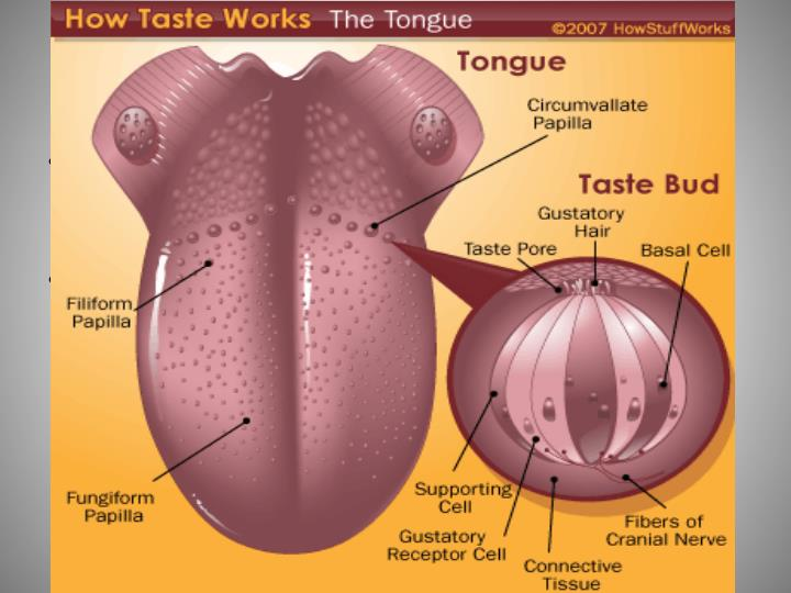 Vertebrates and Taste