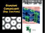 giunzioni comunicanti gap junctions2