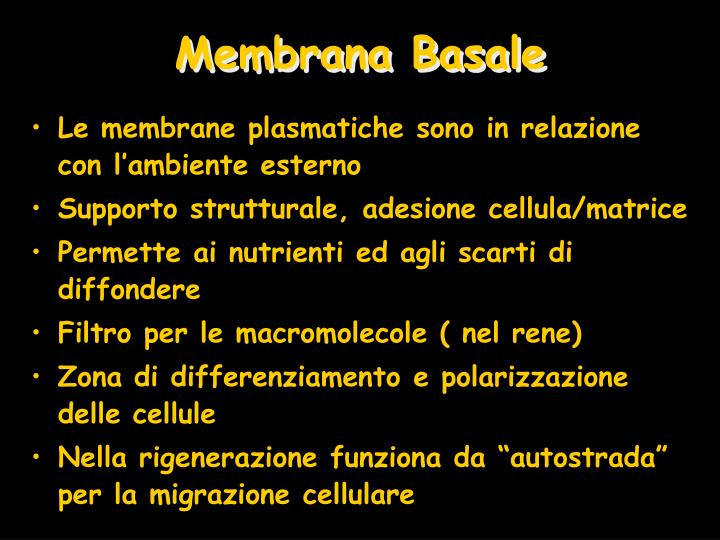 Membrana Basale