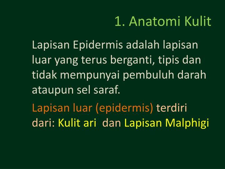 1. Anatomi Kulit