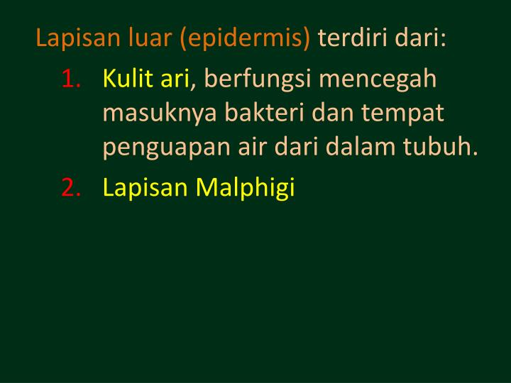 Lapisan luar (epidermis)