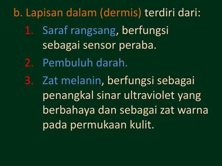 b. Lapisan dalam (dermis)