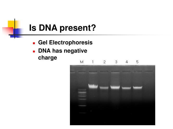 Is DNA present?