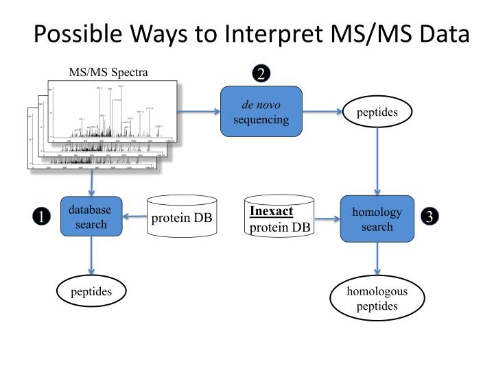 Possible ways to interpret ms ms data