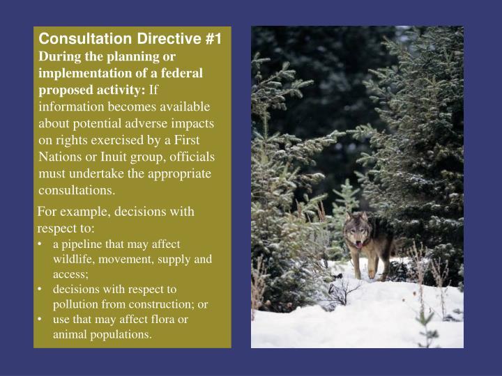 Consultation Directive #1