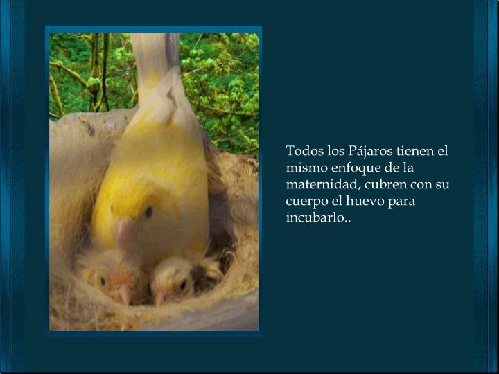 Todos los Pájaros tienen el mismo enfoque de la maternidad, cubren con su cuerpo el huevo para incubarlo..