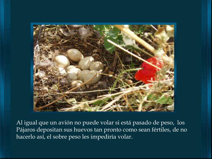Al igual que un avión no puede volar si está pasado de peso,  los Pájaros depositan sus huevos tan pronto como sean fértiles, de no hacerlo así, el sobre peso les impediría volar.