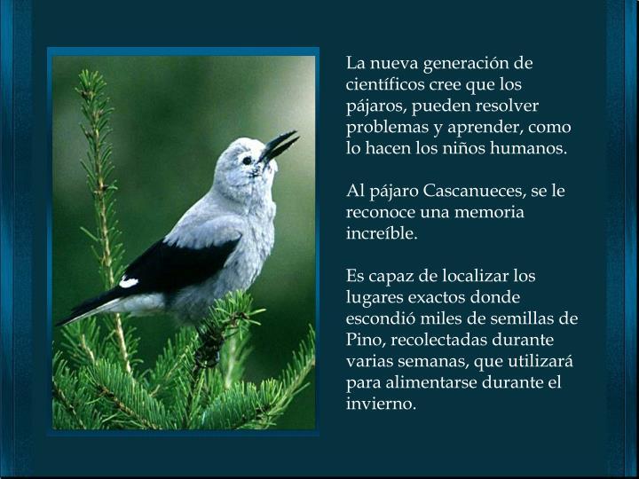La nueva generación de científicos cree que los pájaros, pueden resolver problemas y aprender, como lo hacen los niños humanos.