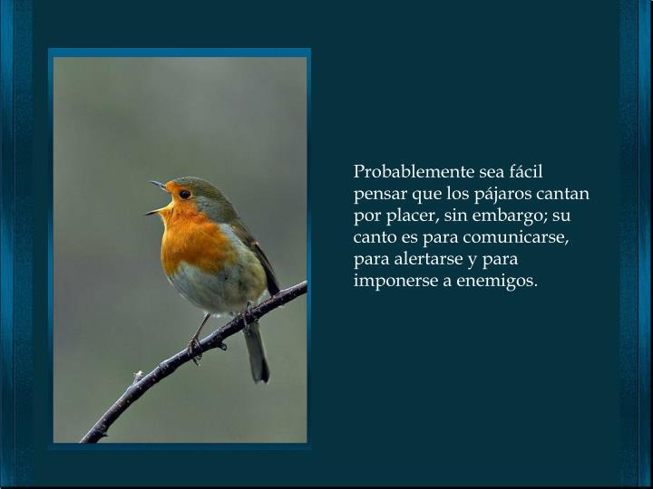 Probablemente sea fácil pensar que los pájaros cantan por placer, sin embargo; su canto es para comunicarse, para alertarse y para imponerse a enemigos.