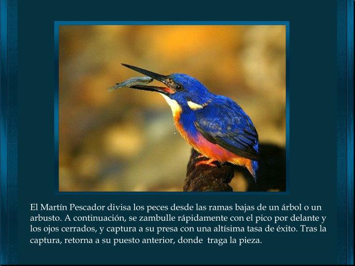 El Martín Pescador