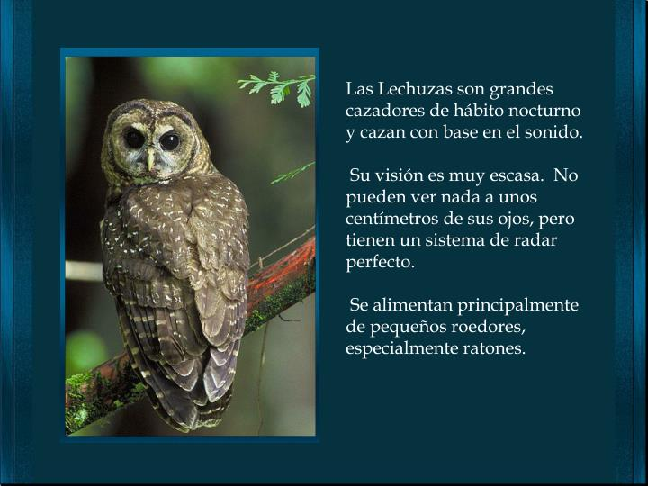 Las Lechuzas son grandes cazadores de hábito nocturno y cazan con base en el sonido.