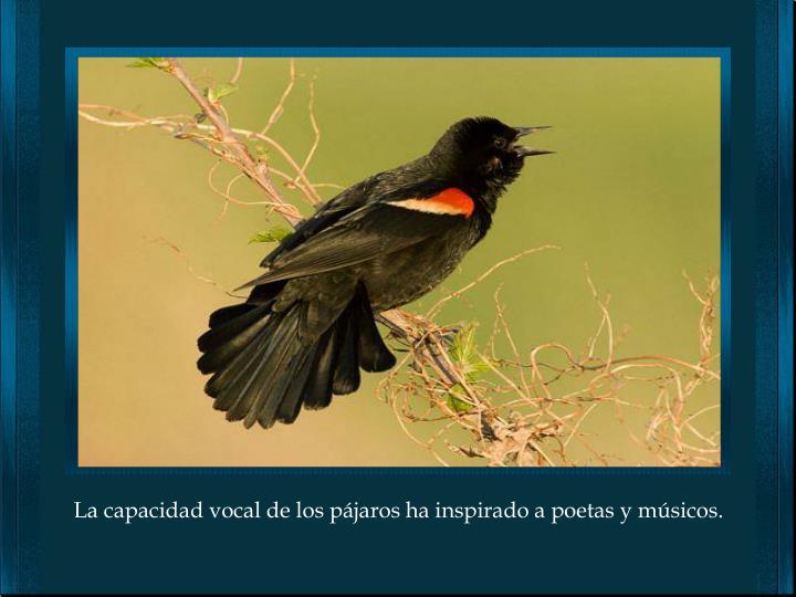 La capacidad vocal de los pájaros ha inspirado a poetas y músicos.