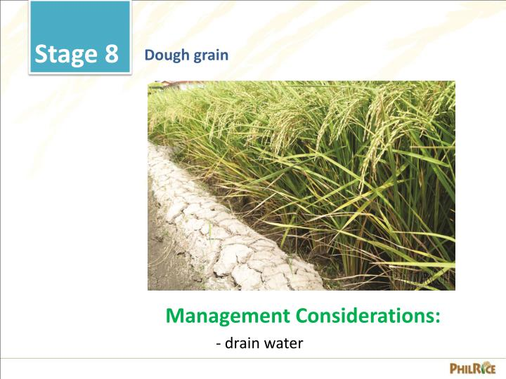 growth stages of a rice plant The effects of salinity at different growth stage on rice yield  and seedling growth of sorghum plant iranian journal of soil and water science fall 19(2): 243-254 sadati n1988 the .